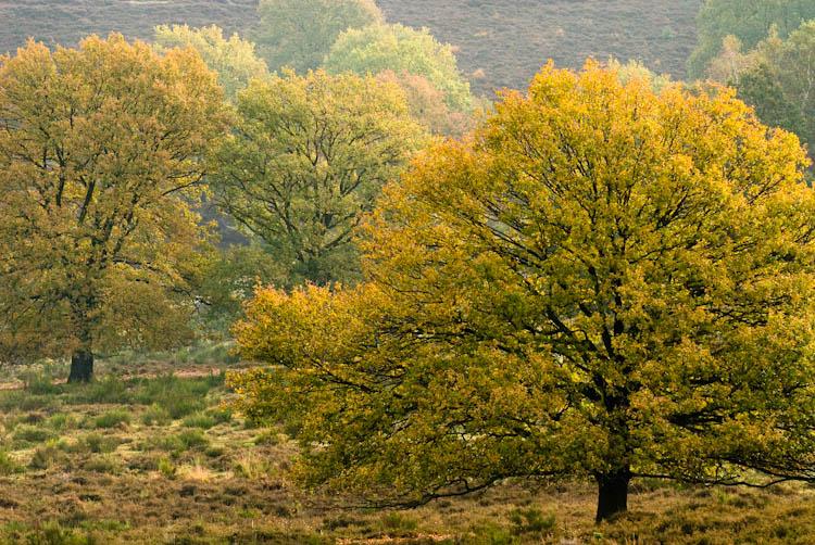 Posbank bomen